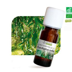Huile essentielle Bio Eucalyptus Radié 10ml Propos Nature