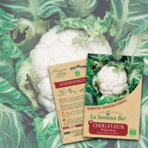 Chou-Fleur White Rock Bio La Semence Bio
