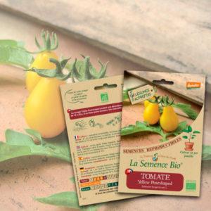 Tomate Yellow Pearshaped Bio La Semence Bio