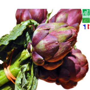 Artichaut Poivrade Bio Bouquet (le bouquet)